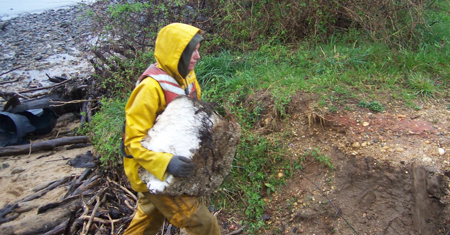 Volunteer in yellow jacket carries beach-ball sized chunk of styrofoam away from the river.